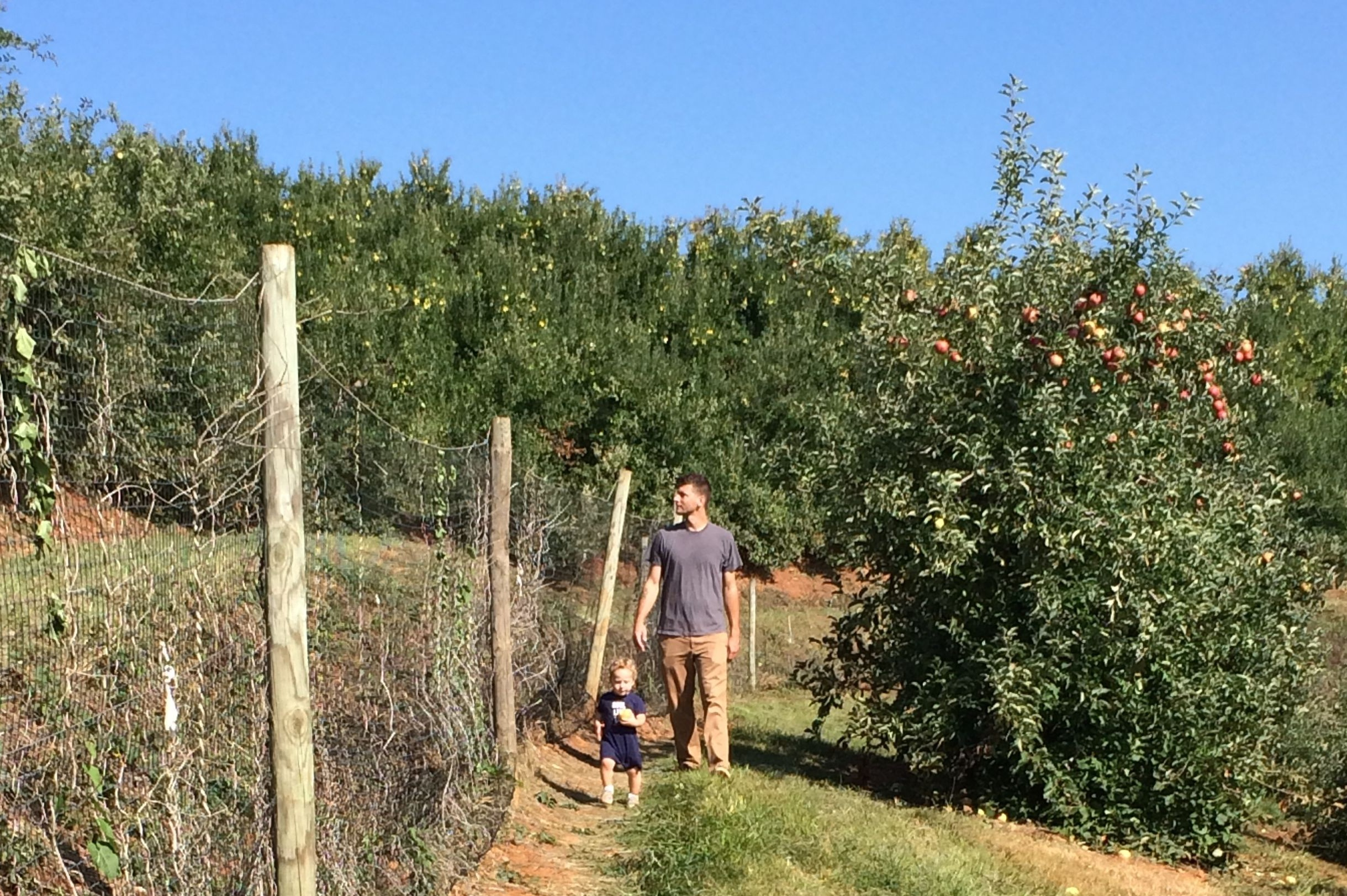apple orchard quality time with family