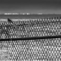 "Photo: Spencer Harris. ""Bird on a Fence."" Licensed under CC BY 2.0"