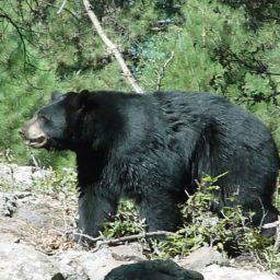 I Was Not Mauled or My Face Eaten Off by a Territorial Bear
