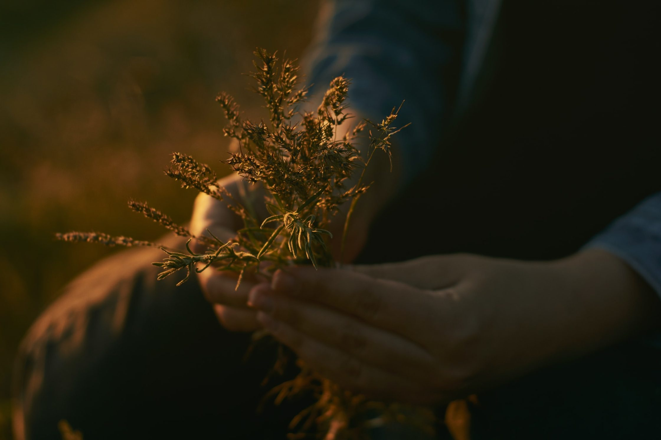 gathering weeds flowers