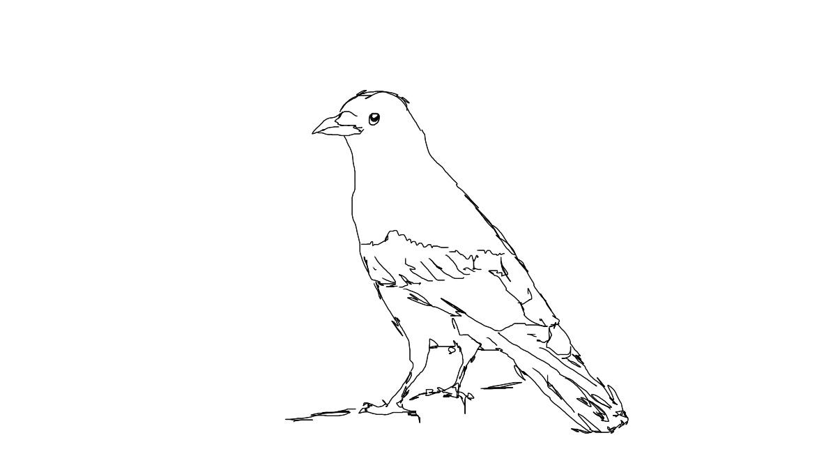 crow line drawing